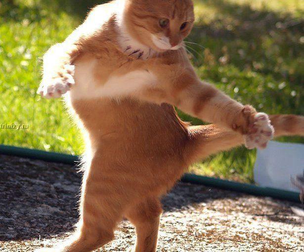 Смешные кошки в действии и на отдыхе